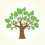 Tree with leafs isolated vector Royalty Free Stock Image