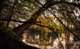 Tree leaning over a lake. Autumn tree leaning over a lake during sunset. Water reflecting the colors royalty free stock photo