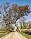 Tree leaning over a rural road. Tree leaning over a rural road in rural Indiana near a cornfield Stock Photos