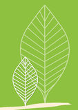 Tree leaves vector illustration