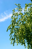 Tree leaves Stock Photos
