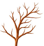 Tree without leaves. Royalty Free Stock Image