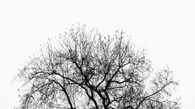 Tree without leaves Stock Images