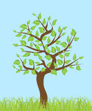 Tree with leaves Royalty Free Stock Photo
