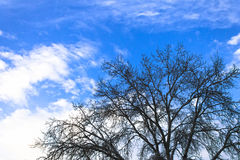 A tree without leaves against a bright blue cloudy sky. Horizontal shot, the theme - the sky, nature Stock Photography