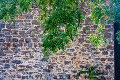 Tree Leaves against Stone Wall Royalty Free Stock Photography
