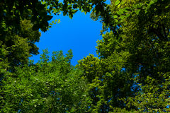 Tree leaves around blue sky. Fresh geen tree leaves surrounding sky spot upward direction wide shot Royalty Free Stock Photography