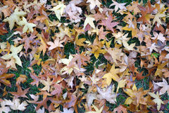 tree leaves in autumn Stock Photo
