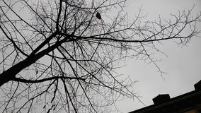 Being different, unique concept. Nonconformist concept, tree with only few leaves left during autumn Stock Photos