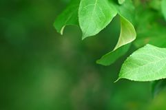 Tree leaves background Royalty Free Stock Photography