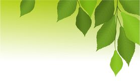 Tree leaves banner Stock Photos