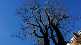 A tree without leaves. Looking up at an almost bare tree which has shedded all its leaves for winter under London skies in late autumn royalty free stock photography