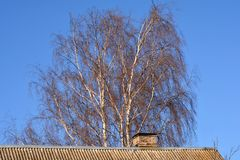 Tree without leaves behind the roof Royalty Free Stock Photo