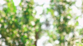 Tree leaves blowing in the wind. Blurred background with motion stock video footage