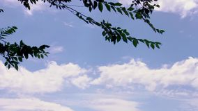 Tree leaves blowing in the wind. Tree branches and leaves blowing in the wind with nice cloudscape and blue sky background stock video footage