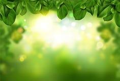 Tree leaves border on green fresh bokeh background royalty free stock photos