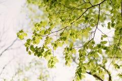 Tree Leaves Stock Image