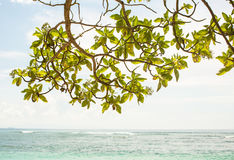 Tree leaves branches with ocean coat view in the background.  Royalty Free Stock Photos