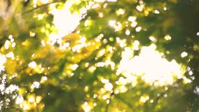 Tree leaves and brigh sunshine. Up view. Blurred background stock video footage
