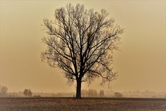 Tree without leaves captured while moody weather in december stock photo