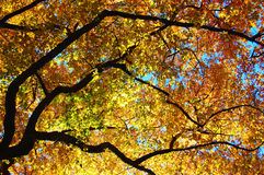 Tree Leaves Changing Colors During the Fall Season Stock Images