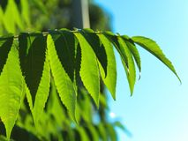 Tree leaves close-up blurred royalty free stock photo