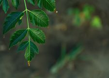 Tree leaves Royalty Free Stock Images