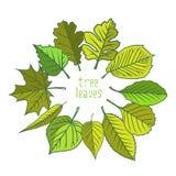 Tree leaves. Colorful illustrations. stock illustration