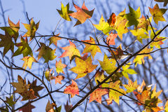 Tree Leaves Colors Stock Photo