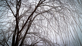 Tree without leaves covered by ice. From the freezing rain in the winter time Royalty Free Stock Images