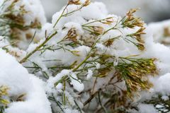 Tree and leaves covered in snow in winter stock photography