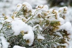 Tree and leaves covered in snow in winter royalty free stock photos