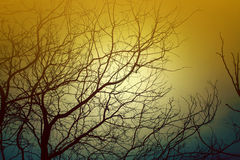 Tree without Leaves are formed from these branches natural light and shadow Royalty Free Stock Photo