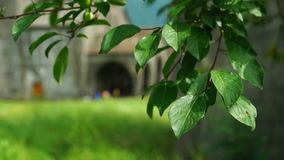Tree leaves in front of ancient armenian church. Tree leaves swaying in the wind in front of ancient armenian monastery Akhtala in blurred background stock footage