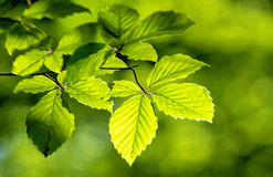 Tree leaves Stock Images