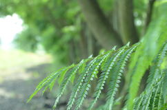 Tree leaves Royalty Free Stock Image