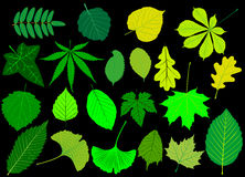Tree leaves green set,. Silhouettes leaf Stock Photos