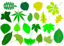 Tree leaves green set,. Silhouettes leaf Royalty Free Stock Photography
