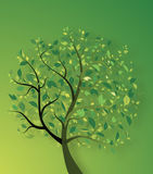 Tree with leaves Stock Photo