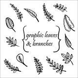 Tree leaves hand drawn  illustration Stock Photo