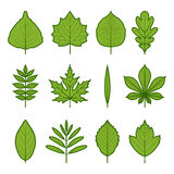 Tree leaves. Icons of leaves of various trees Stock Images