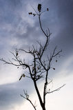 A tree without leaves, lonely mood Stock Photos