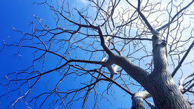 Tree without leaves. Low anglr of tree without leaves under the Sky Stock Photos