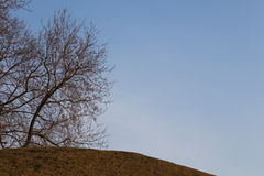 Tree without leaves on a mountain Royalty Free Stock Photo