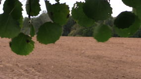 Tree leaves move in wind and tractor fertilize sow field. Tree leaves move in wind and tractor fertilize sow agriculture field in autumn. Focus change shot on stock footage