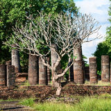 Tree without leaves on old ruins Royalty Free Stock Images