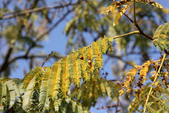 Tree with leaves. Photo image with  sky and leaves Stock Photography