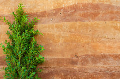 Tree leaves and rammed earth wall Stock Photo