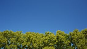 Tree leaves rustle in the wind. Against a blue sky stock video