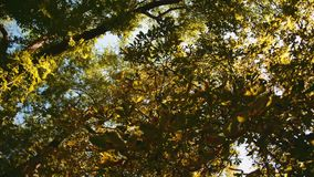 Tree leaves rustle in the wind. Against a blue sky stock footage